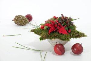 Weihnachts-Stern